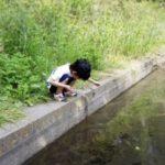 ザリガニ釣り。